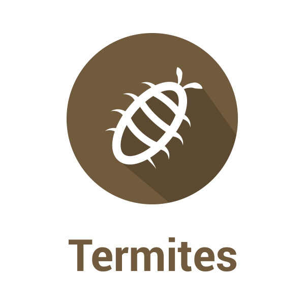 diagnostic immobilier termites nuisible lyon